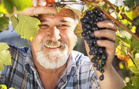 pro-vigne